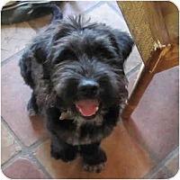 Adopt A Pet :: thor - houston, TX