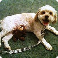Adopt A Pet :: Palmer - Rancho Mirage, CA