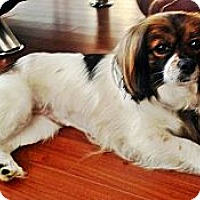 Adopt A Pet :: Maggie - Toronto, ON