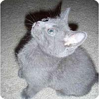 Adopt A Pet :: Frank - Davis, CA