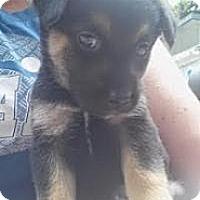 Adopt A Pet :: Jamie Benn - New Boston, NH