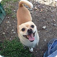 Adopt A Pet :: Butterball - Tinton Falls, NJ