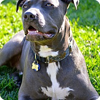 Adopt A Pet :: Larry - La Habra, CA