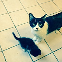 Adopt A Pet :: Puff and Kittens - San Dimas, CA