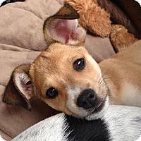 Adopt A Pet :: Dexter - West Richland, WA