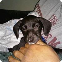 Adopt A Pet :: Dusty - San Antonio, TX