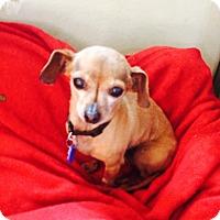 Adopt A Pet :: Poppi - Santa Monica, CA