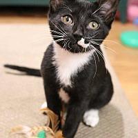 Adopt A Pet :: Ella (2) - Athens, GA