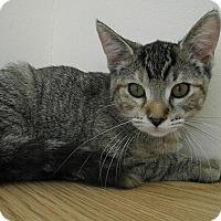 Adopt A Pet :: Faline - Milwaukee, WI