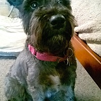 Adopt A Pet :: Rocky - Sharonville, OH