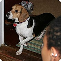 Adopt A Pet :: Maggie Estes - Waldorf, MD