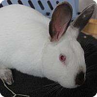 Adopt A Pet :: Peter - New York, NY