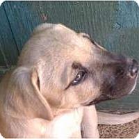 Adopt A Pet :: Beau - Jackson, TN