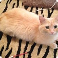 Adopt A Pet :: China Doll - Birmingham, AL