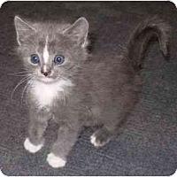 Adopt A Pet :: Pitfall - Modesto, CA