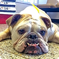Adopt A Pet :: Mugsy - New Orleans, LA