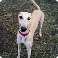 Adopt A Pet :: Monty - Swanzey, NH
