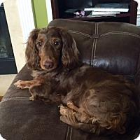 Adopt A Pet :: Pepi - Georgetown, KY