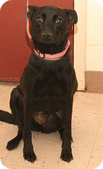 Terrier (Unknown Type, Medium) Mix Dog for adoption in McDonough, Georgia - RAYLENE