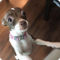 Adopt A Pet :: Nessie - AUSTIN, TX