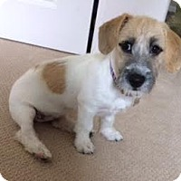 Adopt A Pet :: Mojo - El Cajon, CA