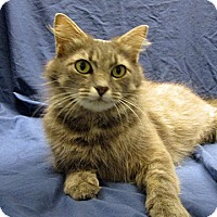 Adopt A Pet :: 17-c04-011 Ginger - Fayetteville, TN