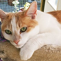 Adopt A Pet :: Dottie - Republic, WA