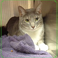 Adopt A Pet :: PUDDLES AVAIL 8/13 - Marietta, GA