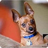 Adopt A Pet :: Ozzy - Nashville, TN