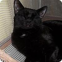 Adopt A Pet :: Jett - Acme, PA