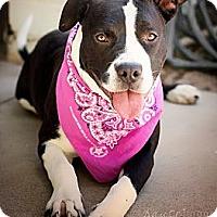 Adopt A Pet :: CLEOPATRA - Phoenix, AZ