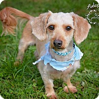 Adopt A Pet :: Charlie - Fort Valley, GA