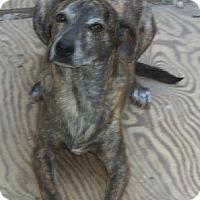 Plott Hound Mix Dog for adoption in Stockton, California - Poko and Poncho