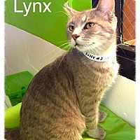 Adopt A Pet :: Lynx-SPONSORED ADOPTION FEE - Jasper, IN