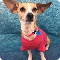 Adopt A Pet :: Nellie - Lake Elsinore, CA