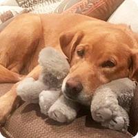 Adopt A Pet :: Sunni - BIRMINGHAM, AL
