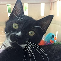 Adopt A Pet :: Miraclaws - Herndon, VA