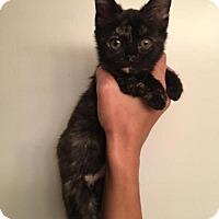 Adopt A Pet :: Hemo - Orlando, FL
