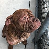 Adopt A Pet :: Otis - Caledon, ON