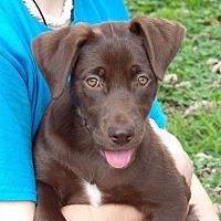 Adopt A Pet :: Mocha (11 lb) Video - Sussex, NJ