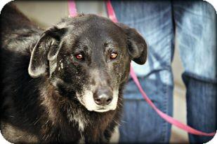 Labrador Retriever Mix Dog for adoption in Anderson, Indiana - Rascal