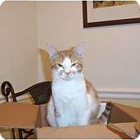 Adopt A Pet :: Cheeky - Jenkintown, PA