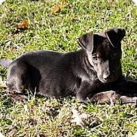 Adopt A Pet :: Jake - Clinton, LA