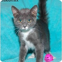 Adopt A Pet :: Samantha - Catasauqua, PA