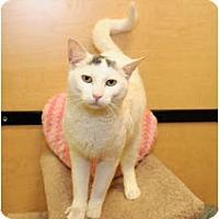 Adopt A Pet :: Davis - Farmingdale, NY