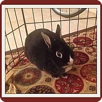Adopt A Pet :: Jessica - Williston, FL