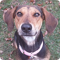 Adopt A Pet :: Lucy - Knoxville, TN