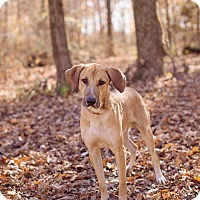 Adopt A Pet :: Bronco - Lewisville, IN