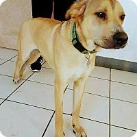 Adopt A Pet :: Yellow - San Diego, CA