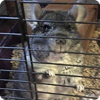 Adopt A Pet :: Pearl - Granby, CT